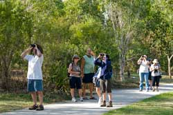 image - birders at Darra
